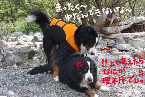 kawapote3.jpg