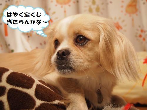 002_convert_20131228222033.jpg