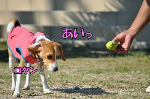 2012102205.jpg