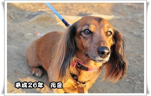 42_20140107140531cc1.jpg