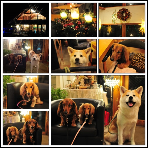 cats-1_2013123123495308b.jpg
