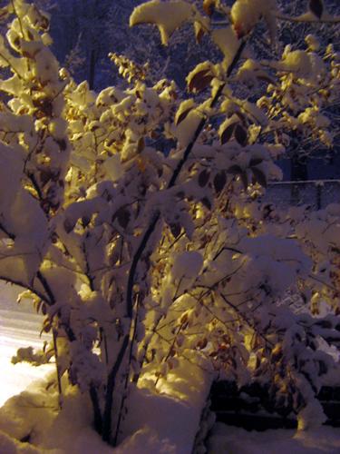 雪のブルーベリー