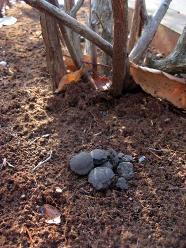 ブルーベリーの肥料ー5