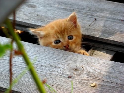 野良のカワイイ子猫ー1