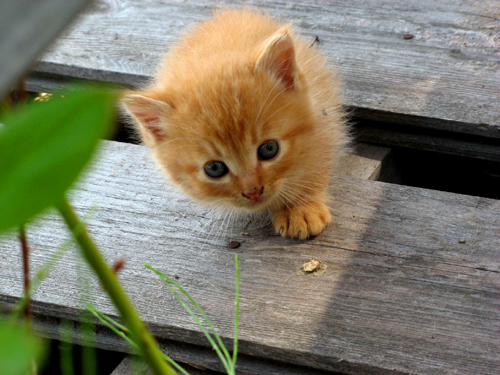 野良のカワイイ子猫ー2
