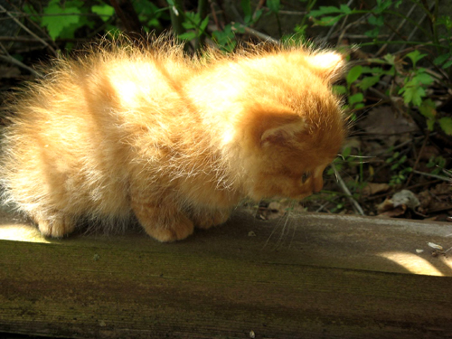 野良のカワイイ子猫ー3