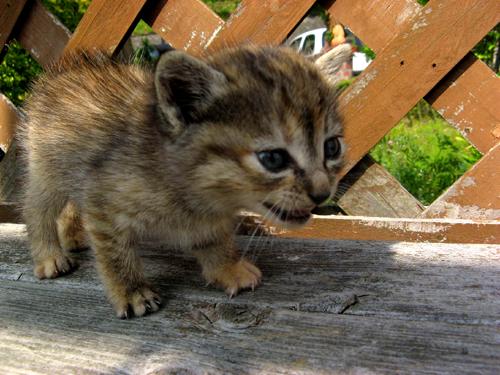 野良のカワイイ子猫ー4
