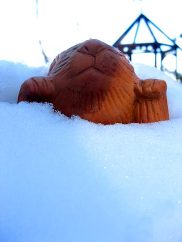 雪うさぎー3
