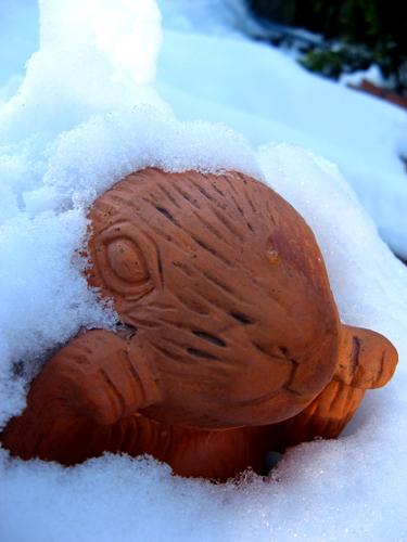 雪うさぎー4