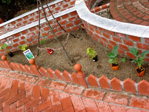 キッチンガーデンの野菜たち2012-3