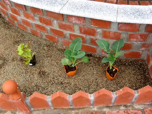 キッチンガーデンの野菜たち2012-4