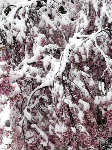 季節はずれの大雪