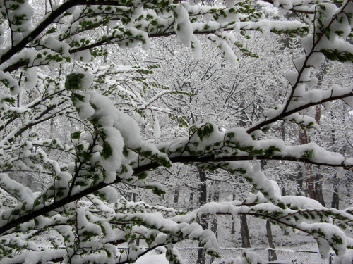 季節はずれの大雪ー3