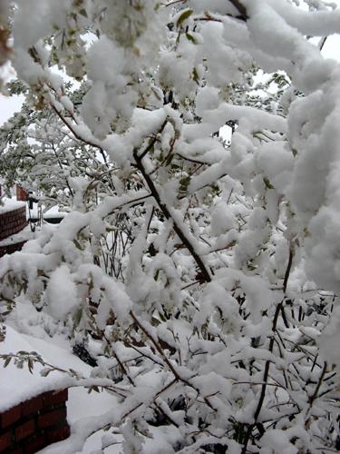 季節はずれの大雪ー4