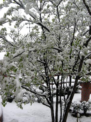 季節はずれの大雪ー5