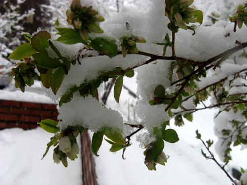 季節はずれの大雪ー7