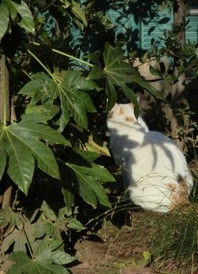 地域の猫1