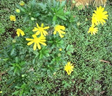 秋の黄色花