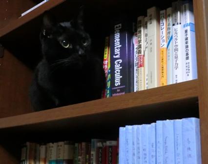 書棚のゆろ2
