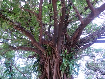 何の木だっけ