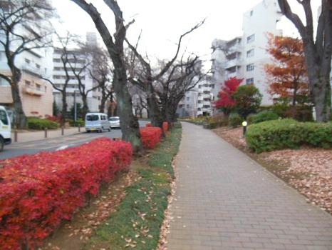 近所の紅葉A