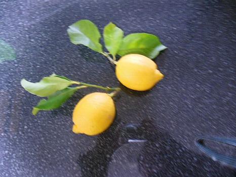 瀬戸内からのレモン