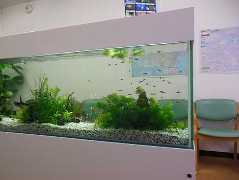 眼科医にある熱帯魚
