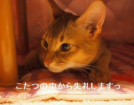 P1160349a.jpg