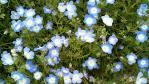 flower220120513.jpg
