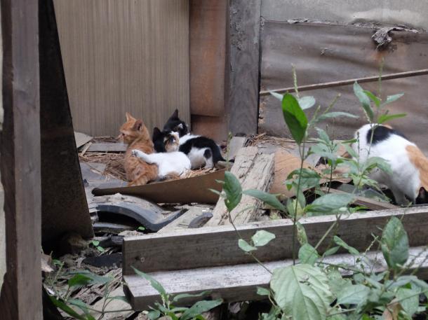 猫6,7,8,9