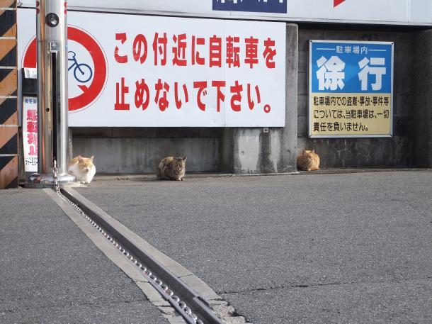 猫25,26,27,28