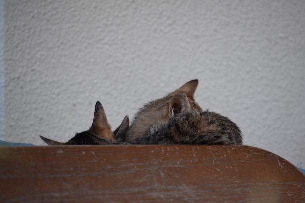 猫43,44,45