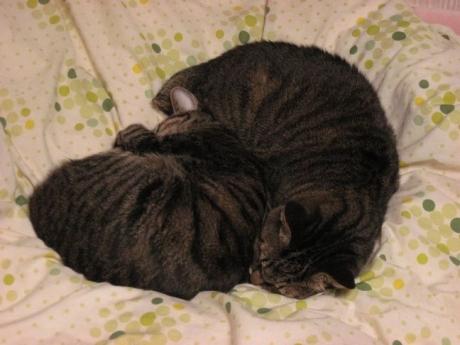 布団の上で猫団子