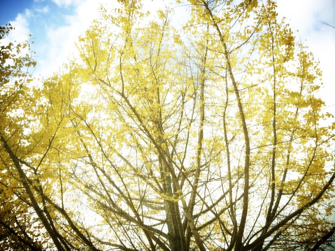 fc2blog_20121121102440085.jpg