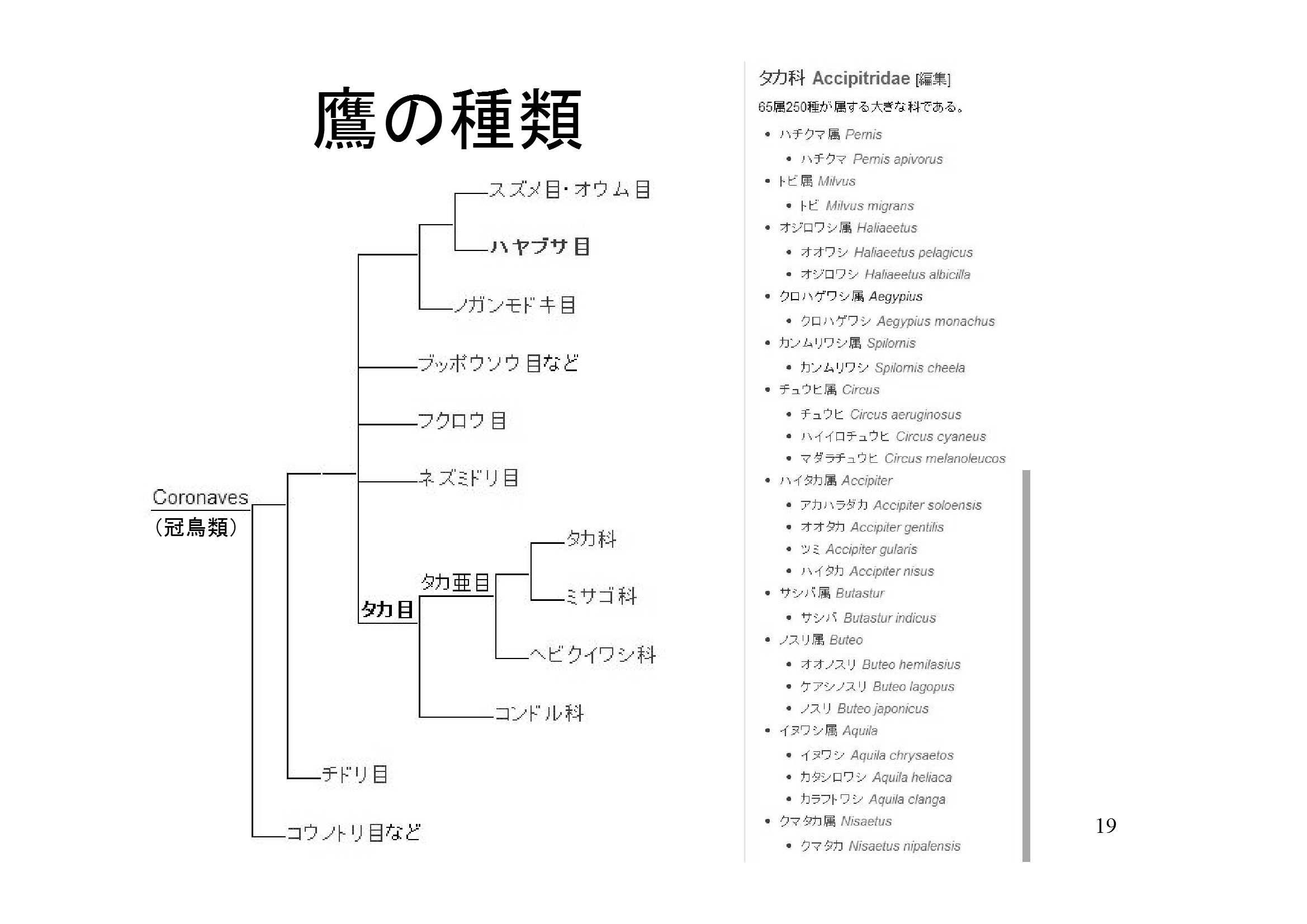 5鷹の道 [互換モード]-19