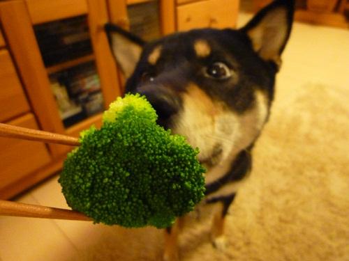 ブロッコリーも好き