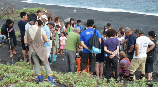大島みどりの会によるアカウミガメの産卵巣調査