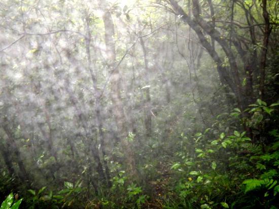 梅雨の二子林地
