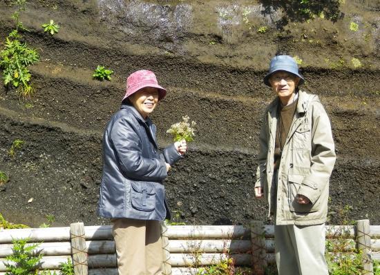 大島火山研究の第一人者 田澤 堅太郎さん(85歳) 奥様がお持ちの枯草はヒヨドリバナ 背景は8C噴火のN4部層