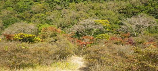 つつ一杯の島の紅葉