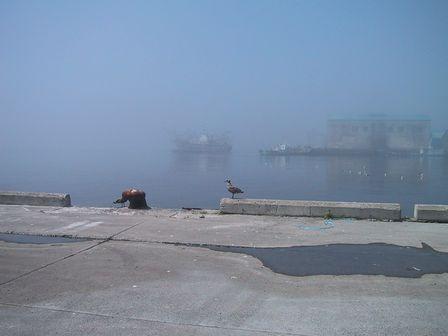 一寸先は「霧」