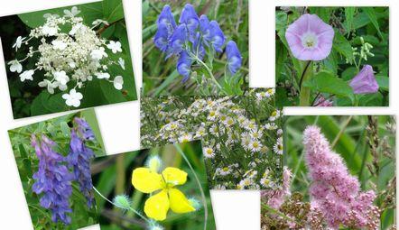 沿道に咲く野の花