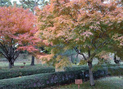 広島県の木、もみじ