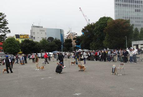 日本犬展覧会