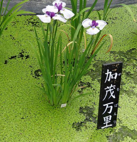 湿地に咲く