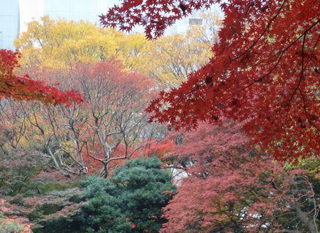 紅葉といっても色はさまざま