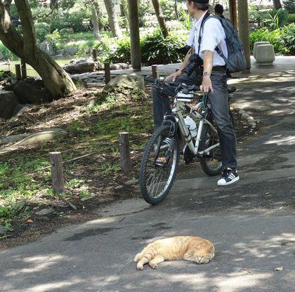 猫もぐったり