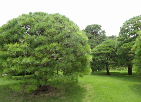 よく手入れされた樹木