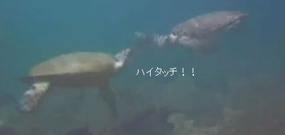 b158j2013_000411.jpg