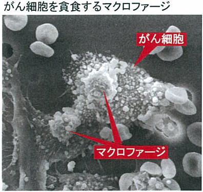 macrofagesystem.jpg
